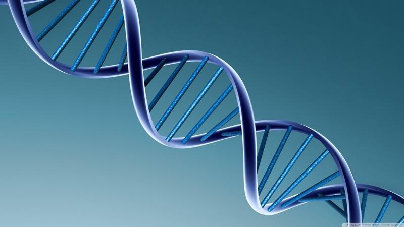 ADN Của Dòng Chảy Lời Sự Sống
